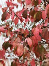 fall tree / bev cooks
