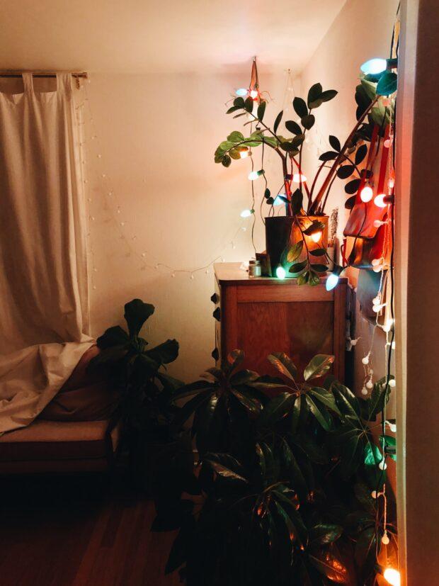 christmas lights / bev cooks