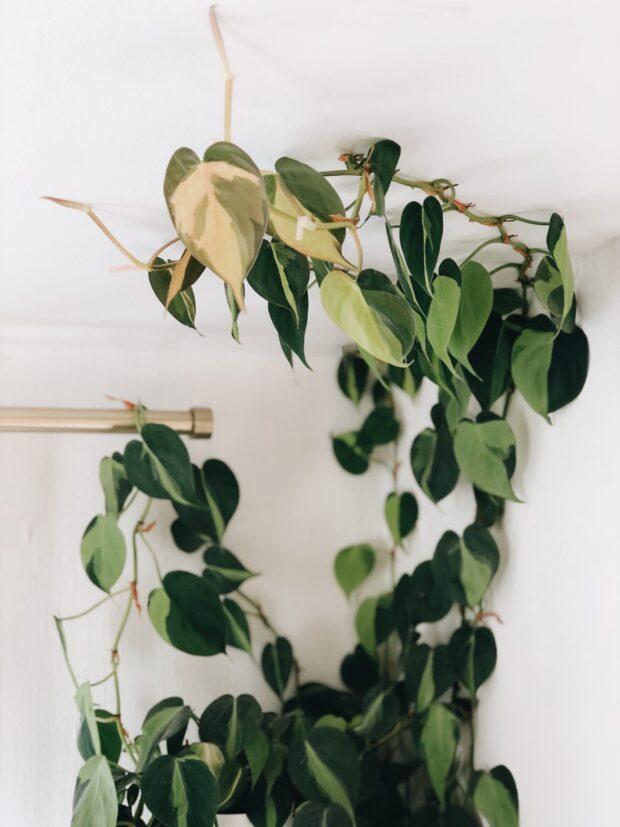 plant on ceiling / bev cooks
