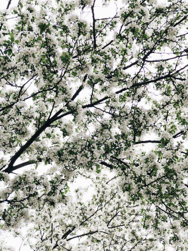 spring trees / bev cooks