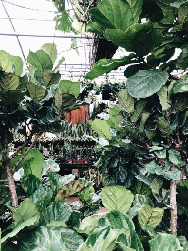plants / bev cooks
