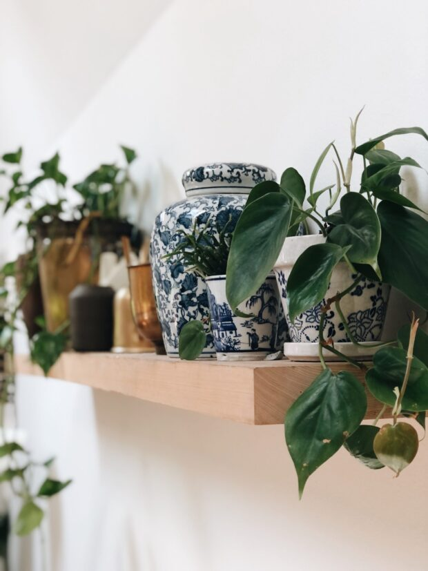 blue and plants / bev cooks
